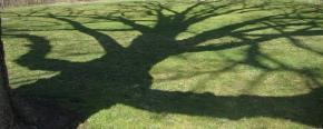 A Tree Falls: AnEssay